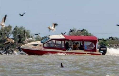 pelicani amb