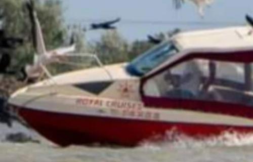 pelicani ambarc