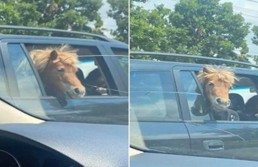 ponei-plimbat-masina-iasi-copii-712039