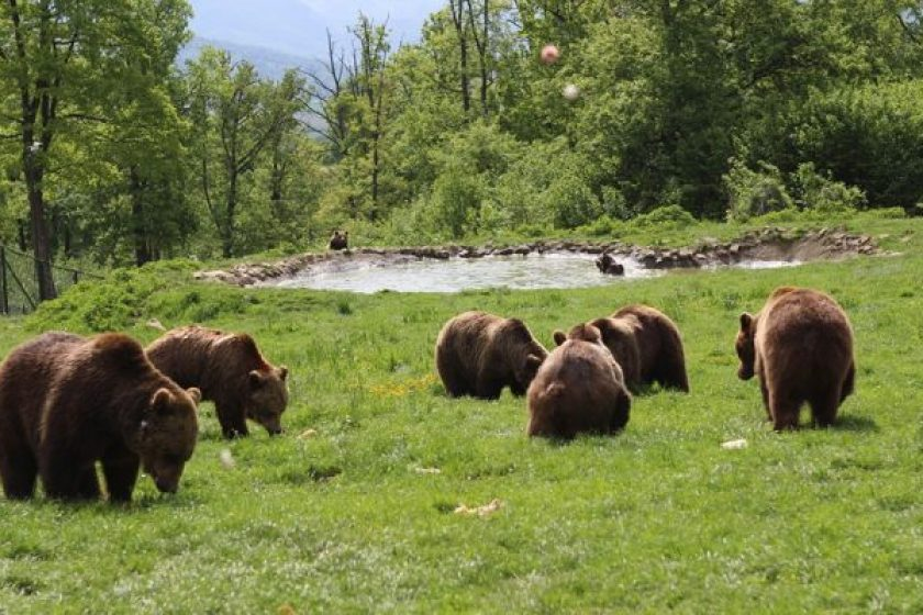ursi-bruni-zarnesti-640×400